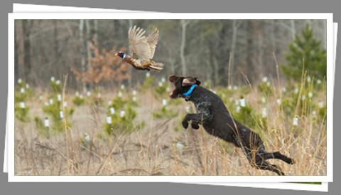 hunting_480